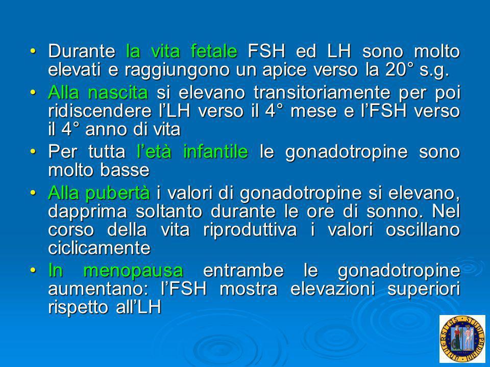 Durante la vita fetale FSH ed LH sono molto elevati e raggiungono un apice verso la 20° s.g.