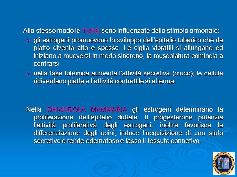 Allo stesso modo le TUBE sono influenzate dallo stimolo ormonale: