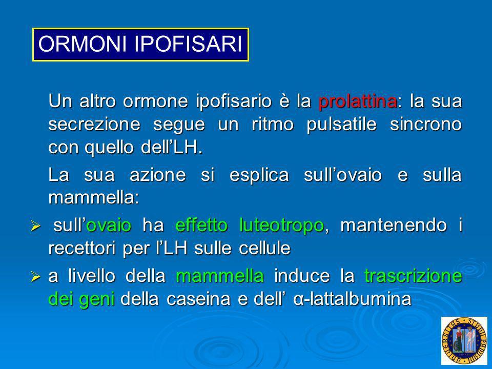 ORMONI IPOFISARIUn altro ormone ipofisario è la prolattina: la sua secrezione segue un ritmo pulsatile sincrono con quello dell'LH.