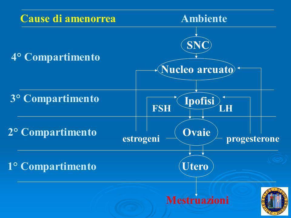Cause di amenorrea Ambiente SNC 4° Compartimento Nucleo arcuato