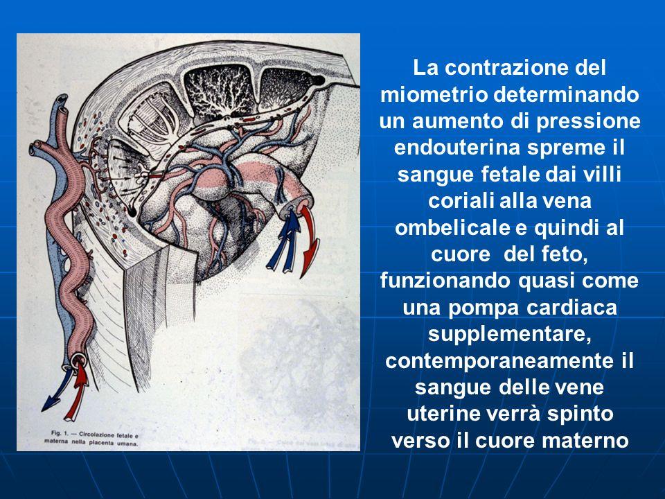 La contrazione del miometrio determinando un aumento di pressione endouterina spreme il sangue fetale dai villi coriali alla vena ombelicale e quindi al cuore del feto, funzionando quasi come una pompa cardiaca supplementare, contemporaneamente il sangue delle vene uterine verrà spinto verso il cuore materno