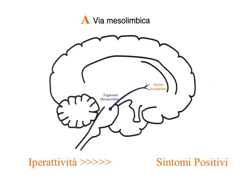 Tegmento Mesencefalico