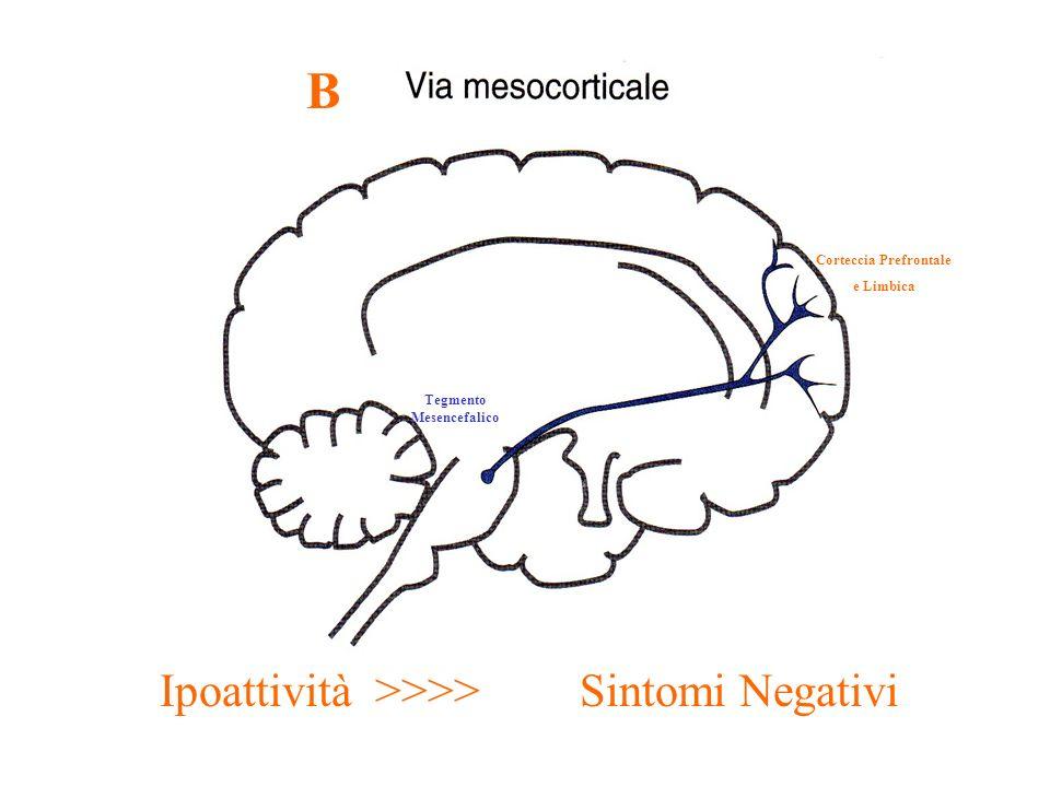 Corteccia Prefrontale Tegmento Mesencefalico