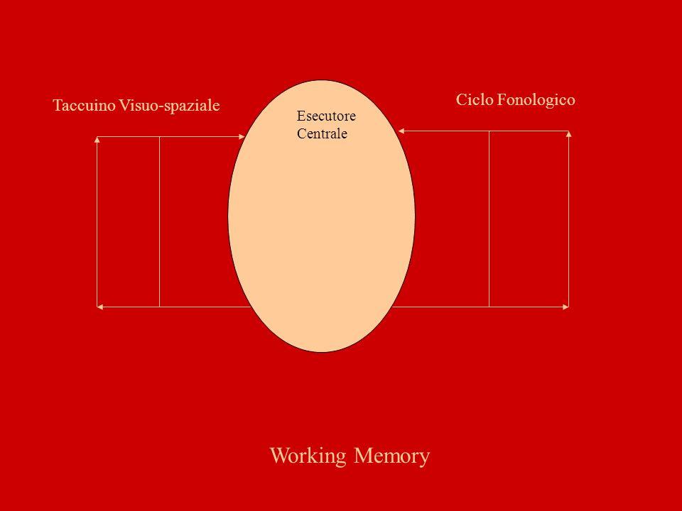 Working Memory Ciclo Fonologico Taccuino Visuo-spaziale