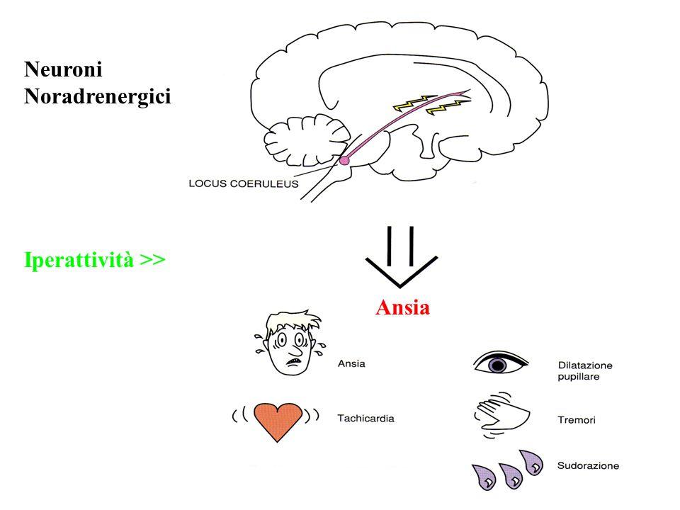 Neuroni Noradrenergici