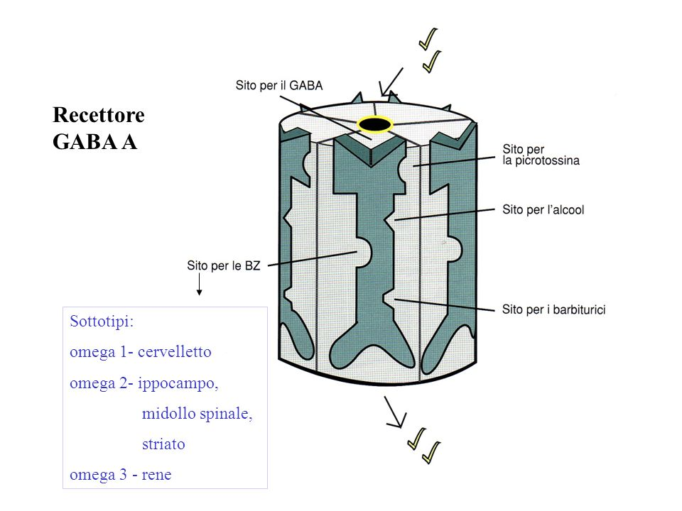 Recettore GABA A Sottotipi: omega 1- cervelletto omega 2- ippocampo,