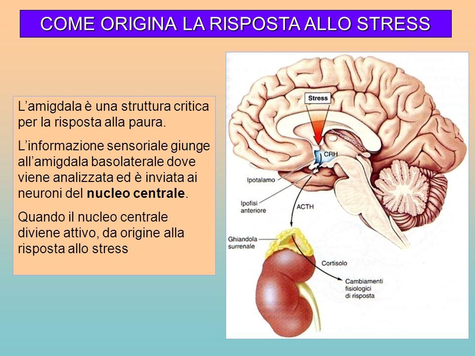 COME ORIGINA LA RISPOSTA ALLO STRESS