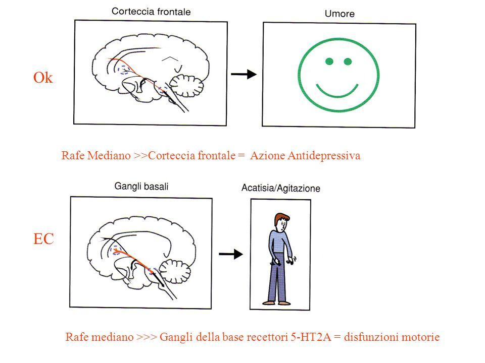 Ok EC Rafe Mediano >>Corteccia frontale = Azione Antidepressiva