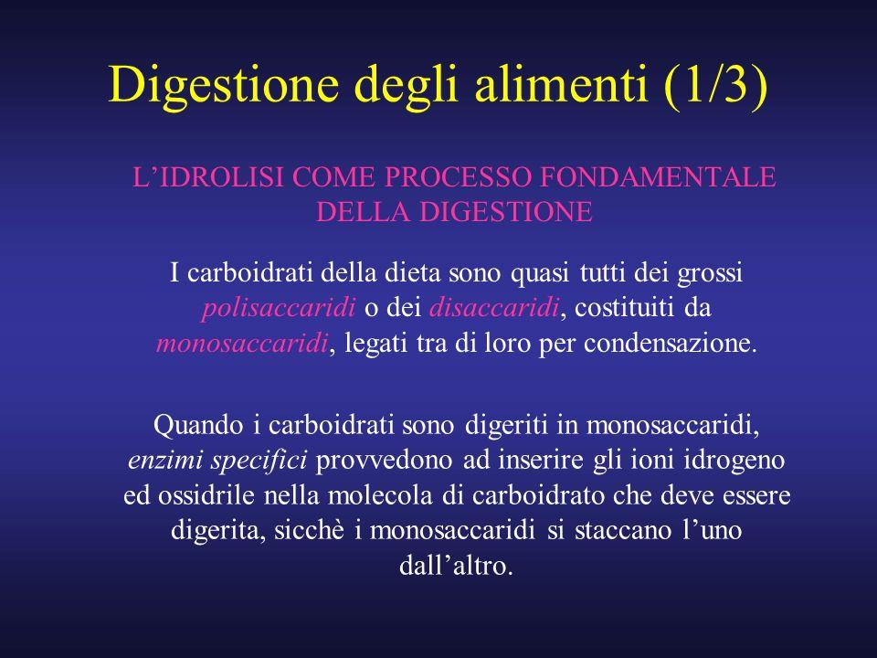 Digestione degli alimenti (1/3)