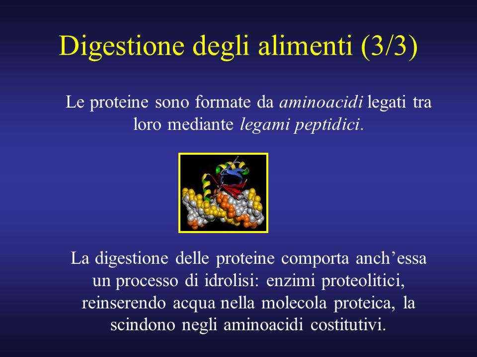 Digestione degli alimenti (3/3)
