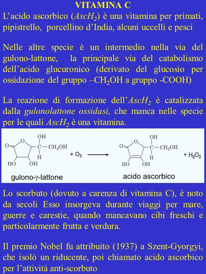 VITAMINA C L'acido ascorbico (AscH2) è una vitamina per primati, pipistrello, porcellino d'India, alcuni uccelli e pesci.