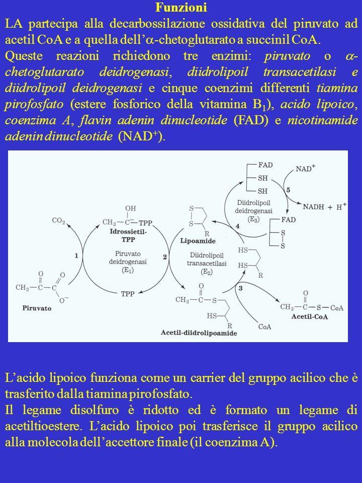 Funzioni LA partecipa alla decarbossilazione ossidativa del piruvato ad acetil CoA e a quella dell'-chetoglutarato a succinil CoA.
