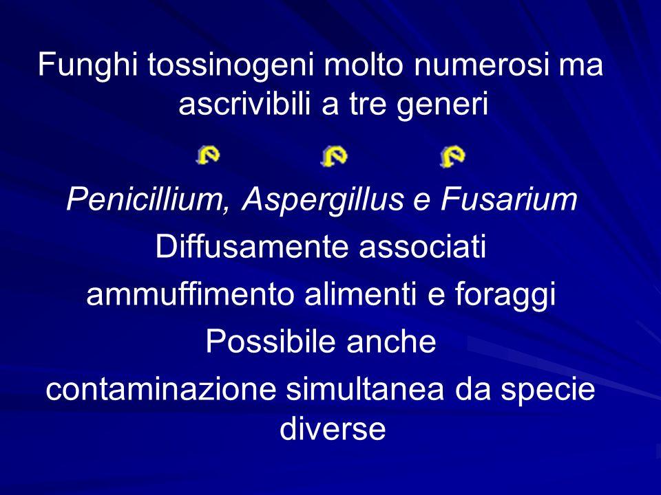 Funghi tossinogeni molto numerosi ma ascrivibili a tre generi