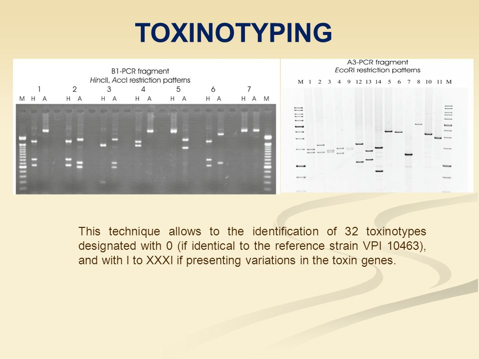 TOXINOTYPING