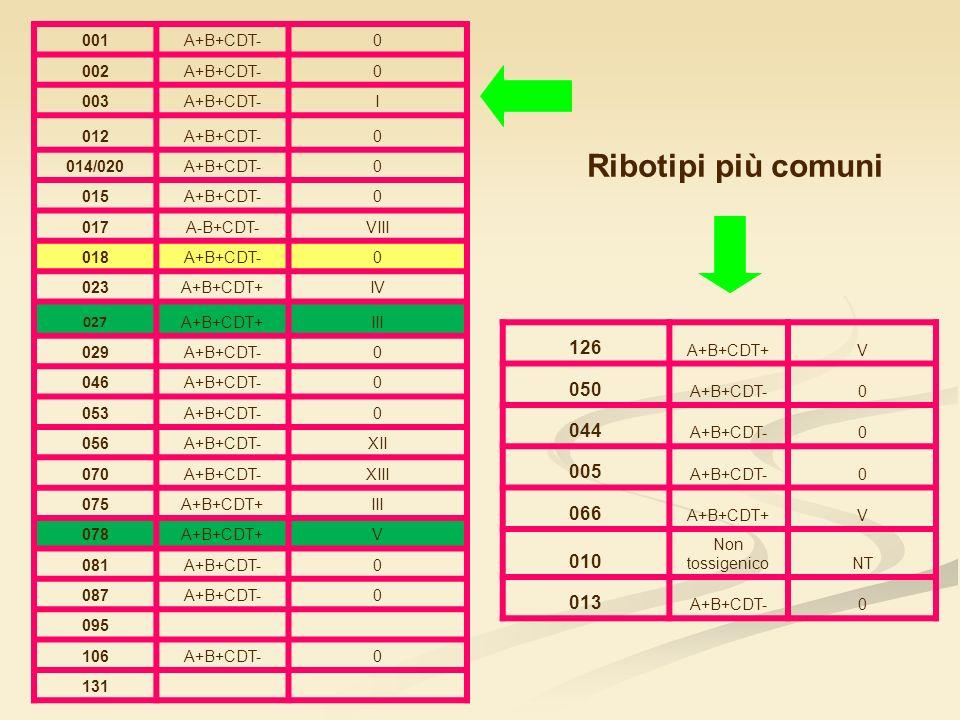 Ribotipi più comuni 126 050 044 005 066 010 013 001 A+B+CDT- 002 003 I