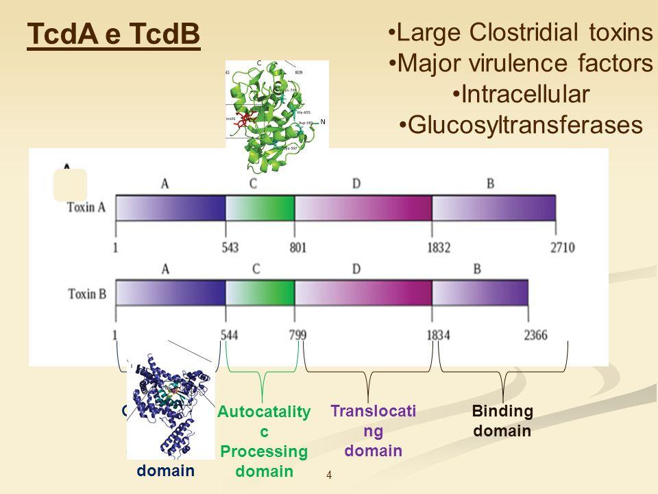 TcdA e TcdB Large Clostridial toxins Major virulence factors