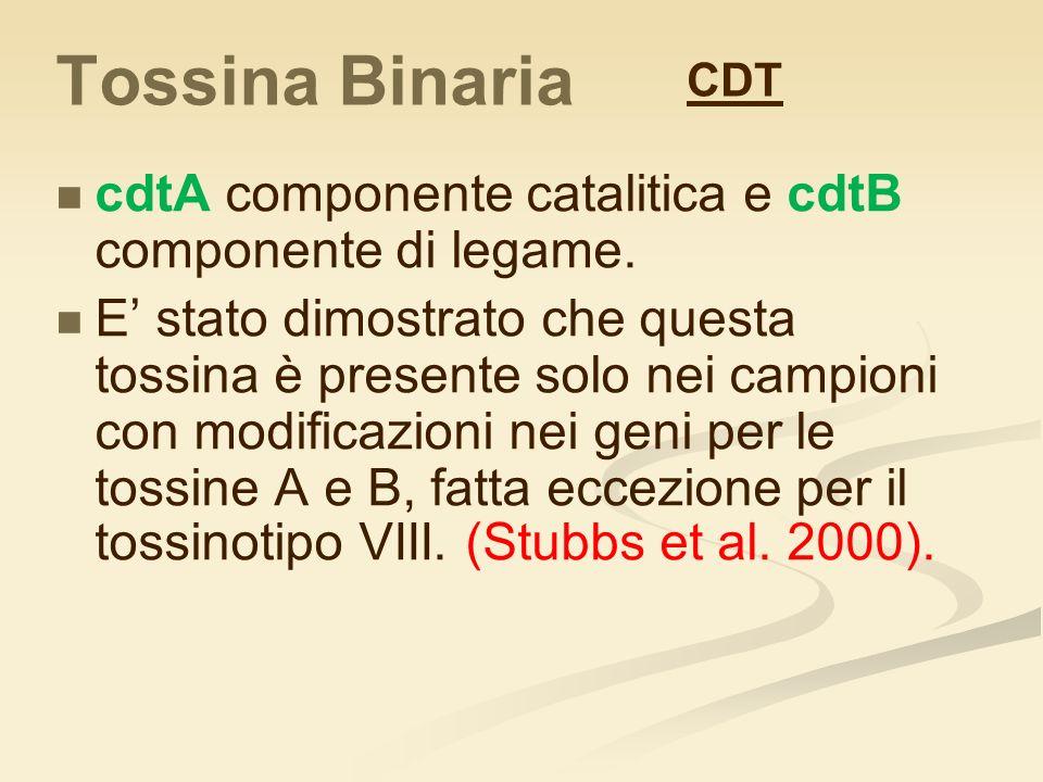 Tossina Binaria CDT. cdtA componente catalitica e cdtB componente di legame.