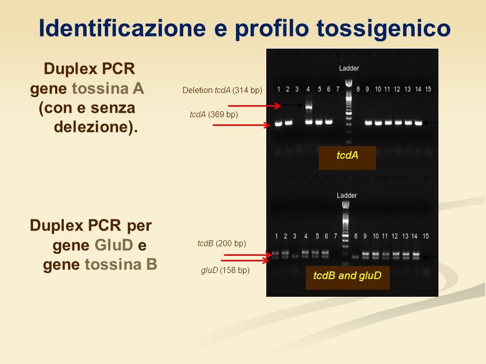 Identificazione e profilo tossigenico