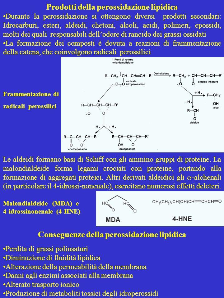 Prodotti della perossidazione lipidica