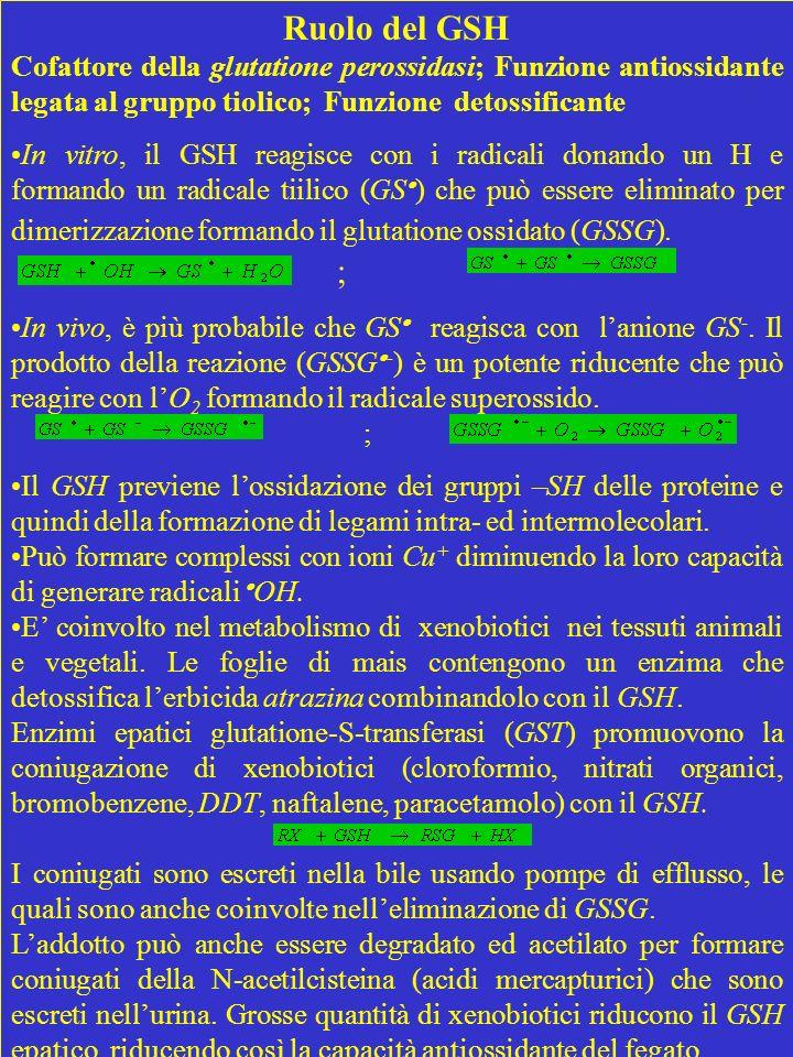 Ruolo del GSH Cofattore della glutatione perossidasi; Funzione antiossidante legata al gruppo tiolico; Funzione detossificante.