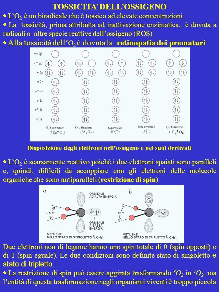 Disposizione degli elettroni nell'ossigeno e nei suoi dertivati