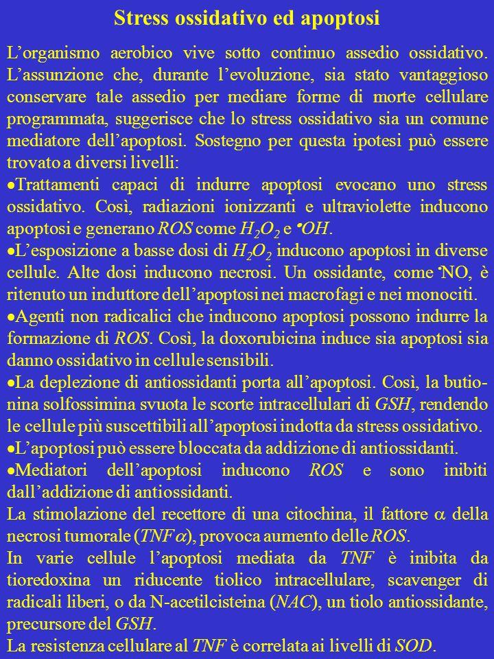 Stress ossidativo ed apoptosi
