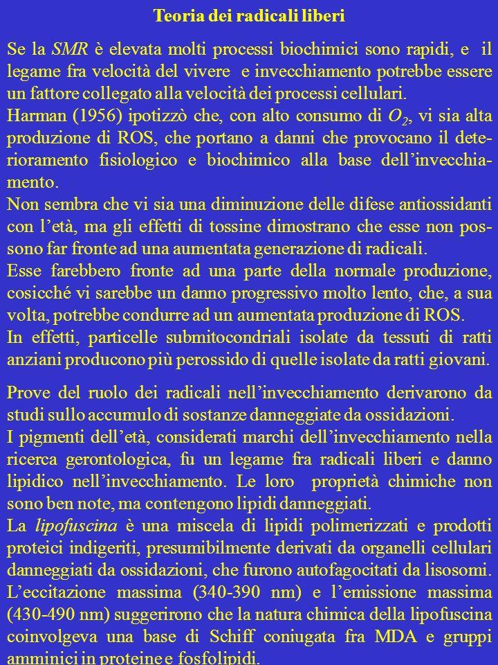 Teoria dei radicali liberi