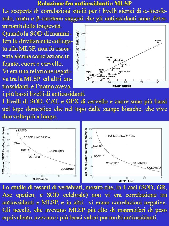 Relazione fra antiossidanti e MLSP