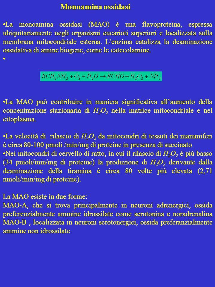 Monoamina ossidasi
