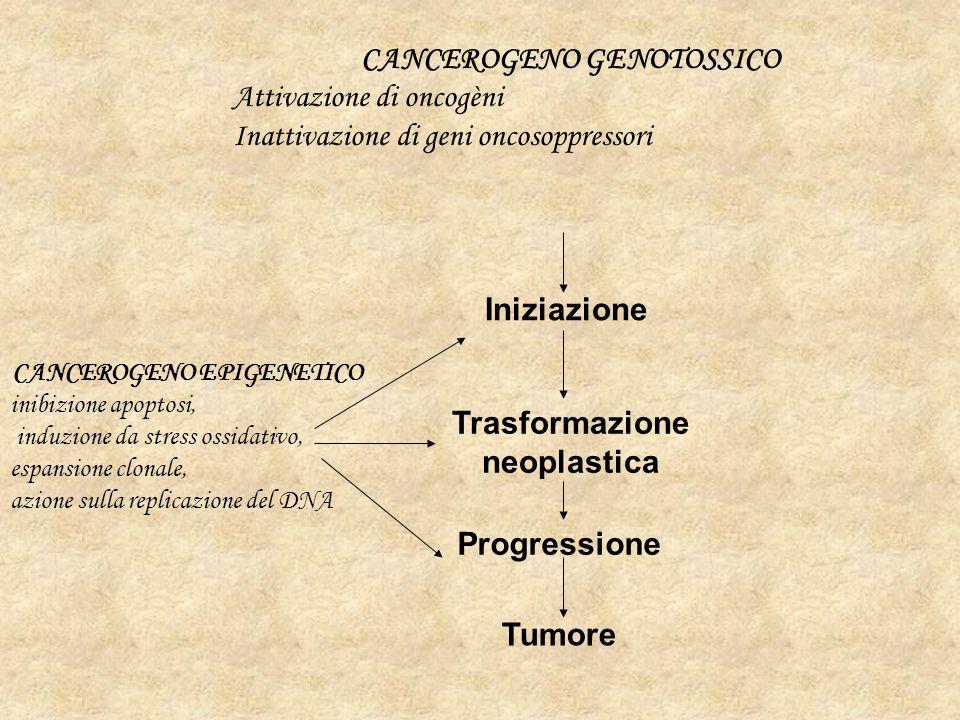 Trasformazione neoplastica