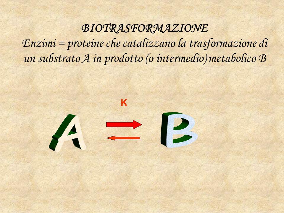 BIOTRASFORMAZIONE Enzimi = proteine che catalizzano la trasformazione di un substrato A in prodotto (o intermedio) metabolico B.