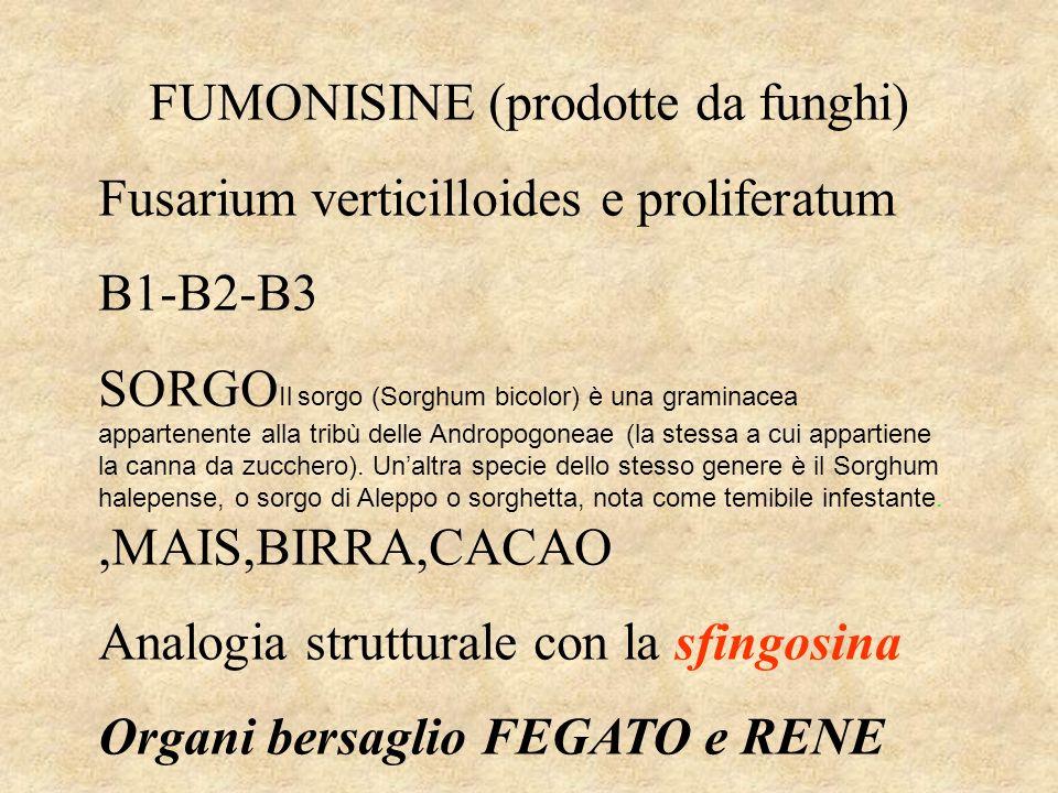 FUMONISINE (prodotte da funghi)