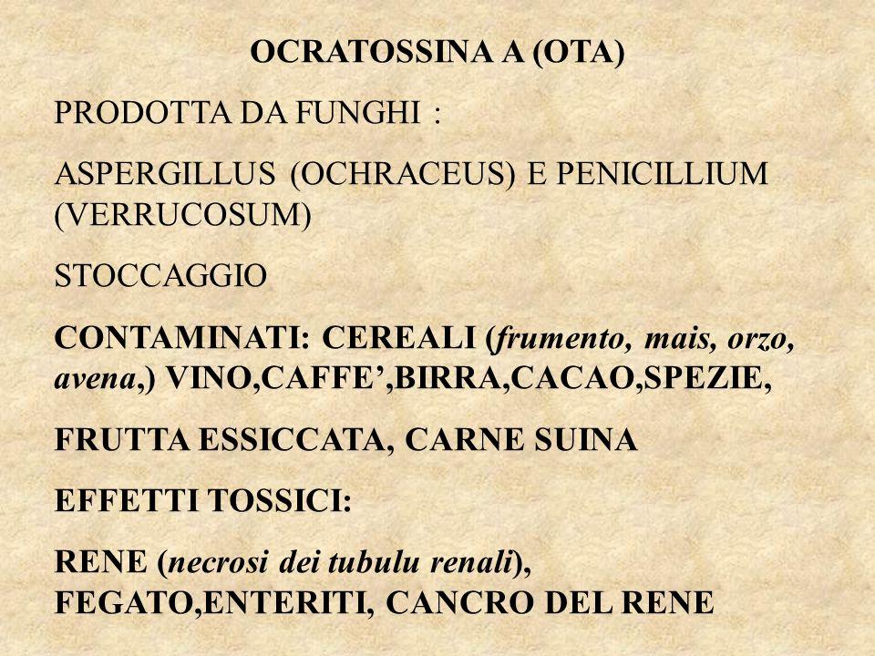 OCRATOSSINA A (OTA) PRODOTTA DA FUNGHI : ASPERGILLUS (OCHRACEUS) E PENICILLIUM (VERRUCOSUM) STOCCAGGIO.