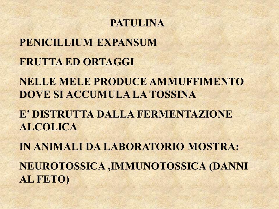 PATULINA PENICILLIUM EXPANSUM. FRUTTA ED ORTAGGI. NELLE MELE PRODUCE AMMUFFIMENTO DOVE SI ACCUMULA LA TOSSINA.