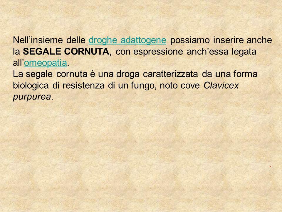 Nell'insieme delle droghe adattogene possiamo inserire anche la SEGALE CORNUTA, con espressione anch'essa legata all'omeopatia.