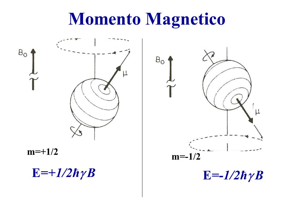 Momento Magnetico m=+1/2 m=-1/2 E=+1/2ħg B E=-1/2ħg B