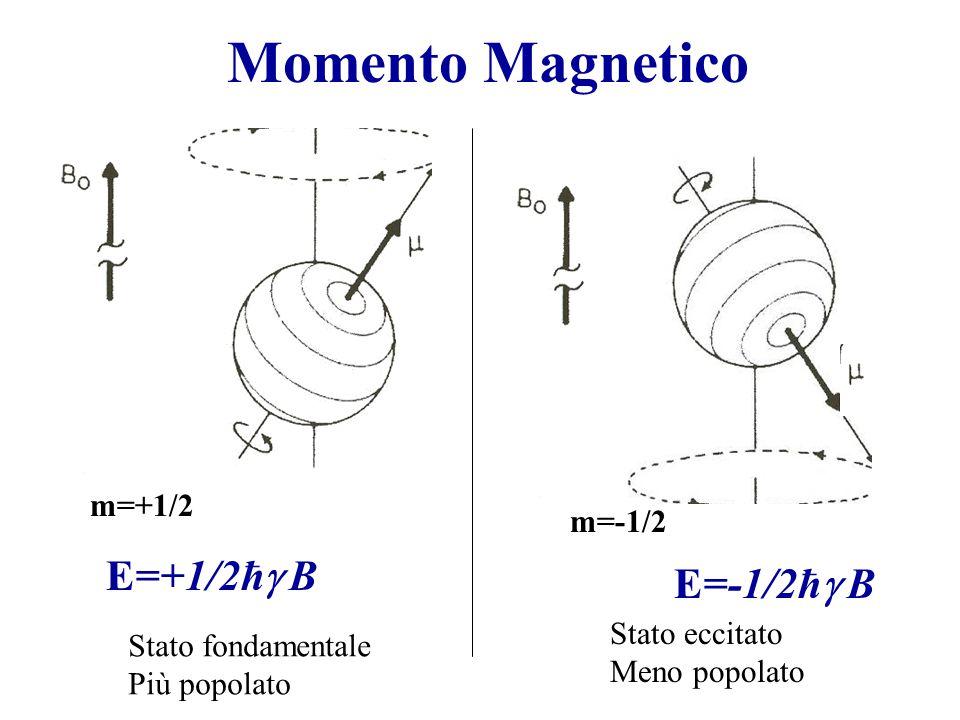 Momento Magnetico E=+1/2ħg B E=-1/2ħg B m=+1/2 m=-1/2 Stato eccitato