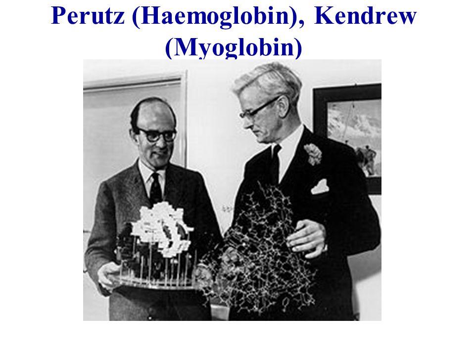Perutz (Haemoglobin), Kendrew (Myoglobin)