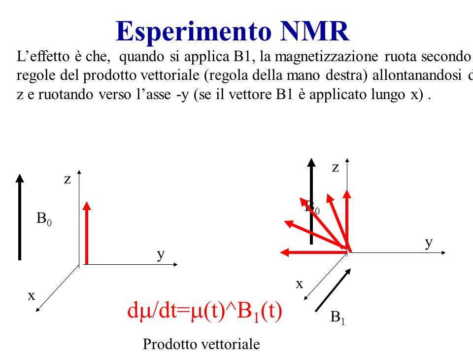 Esperimento NMR dm/dt=m(t)^B1(t)