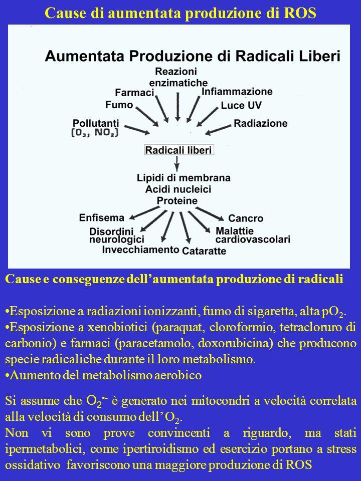 Cause di aumentata produzione di ROS