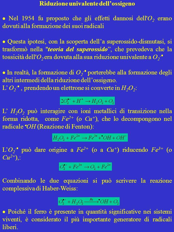 Riduzione univalente dell'ossigeno
