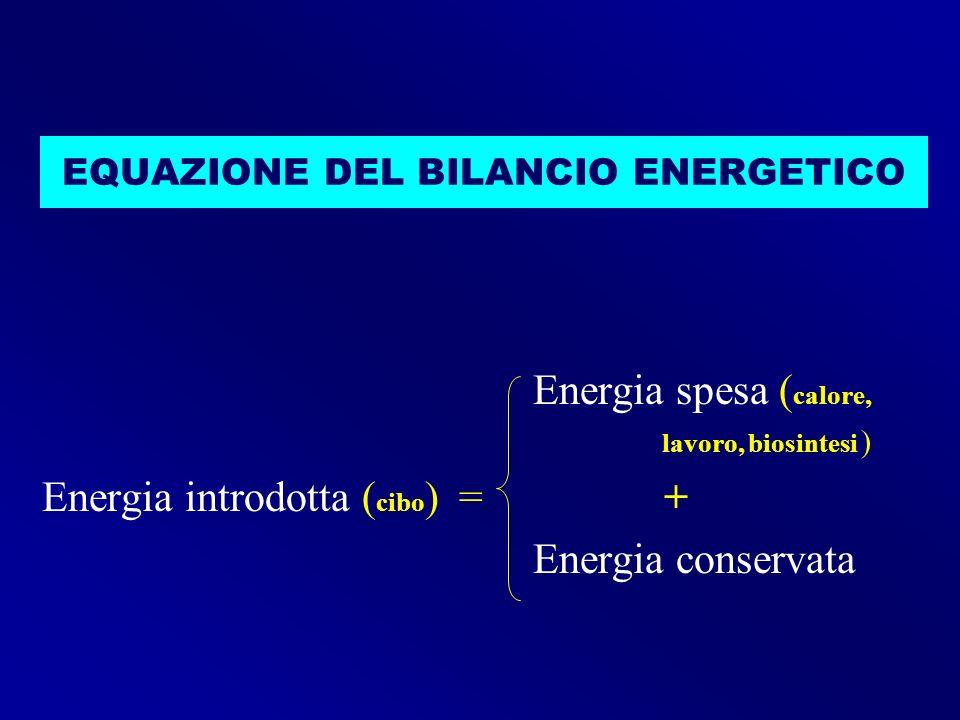 EQUAZIONE DEL BILANCIO ENERGETICO