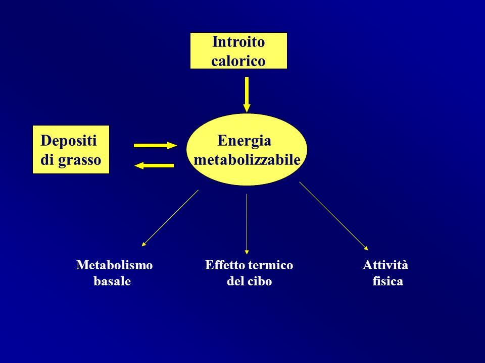 Metabolismo Effetto termico Attività basale del cibo fisica