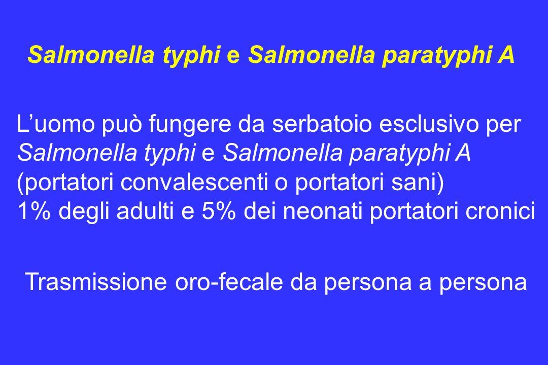 Salmonella typhi e Salmonella paratyphi A