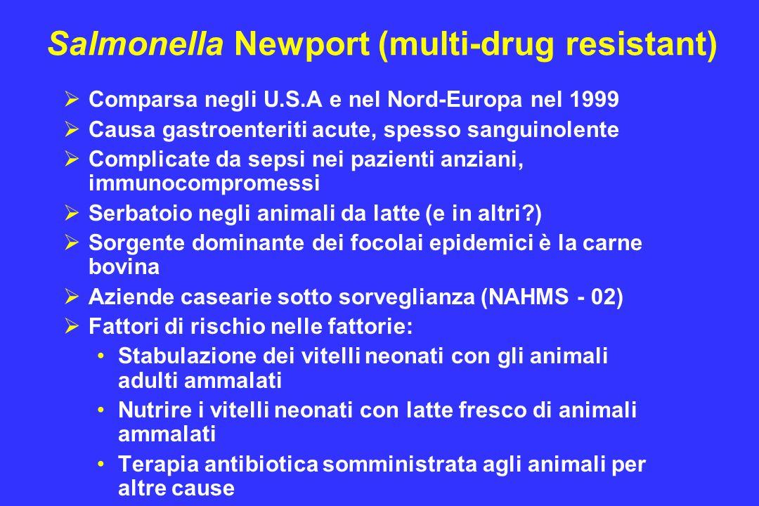 Salmonella Newport (multi-drug resistant)