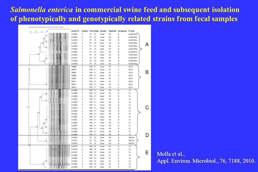 Salmonella enterica in commercial swine feed and subsequent isolation of phenotypically and genotypically related strains from fecal samples