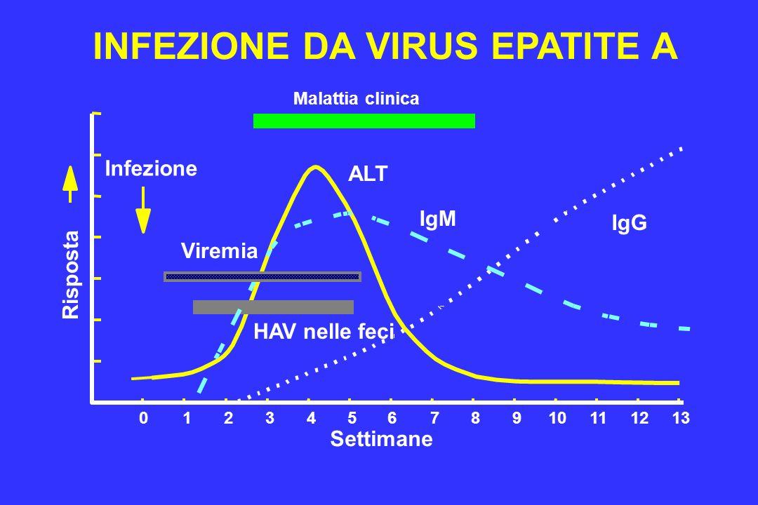 INFEZIONE DA VIRUS EPATITE A