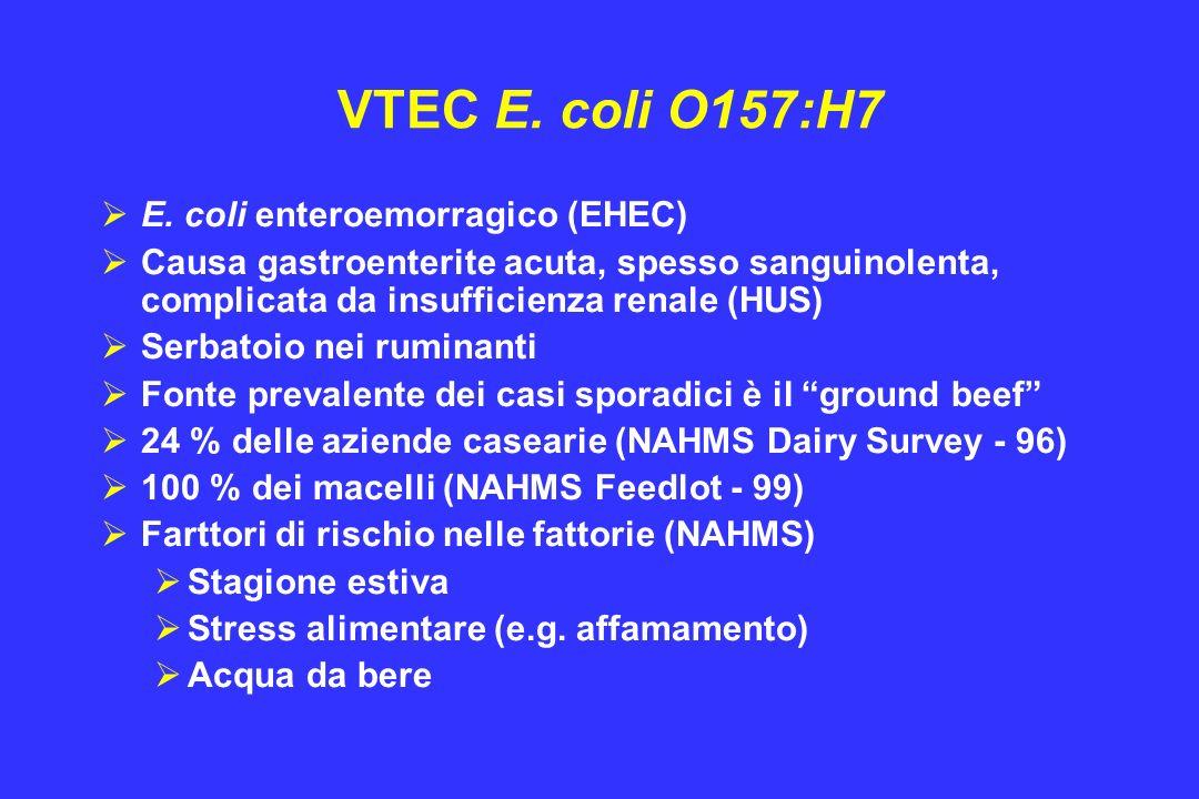 VTEC E. coli O157:H7 E. coli enteroemorragico (EHEC)