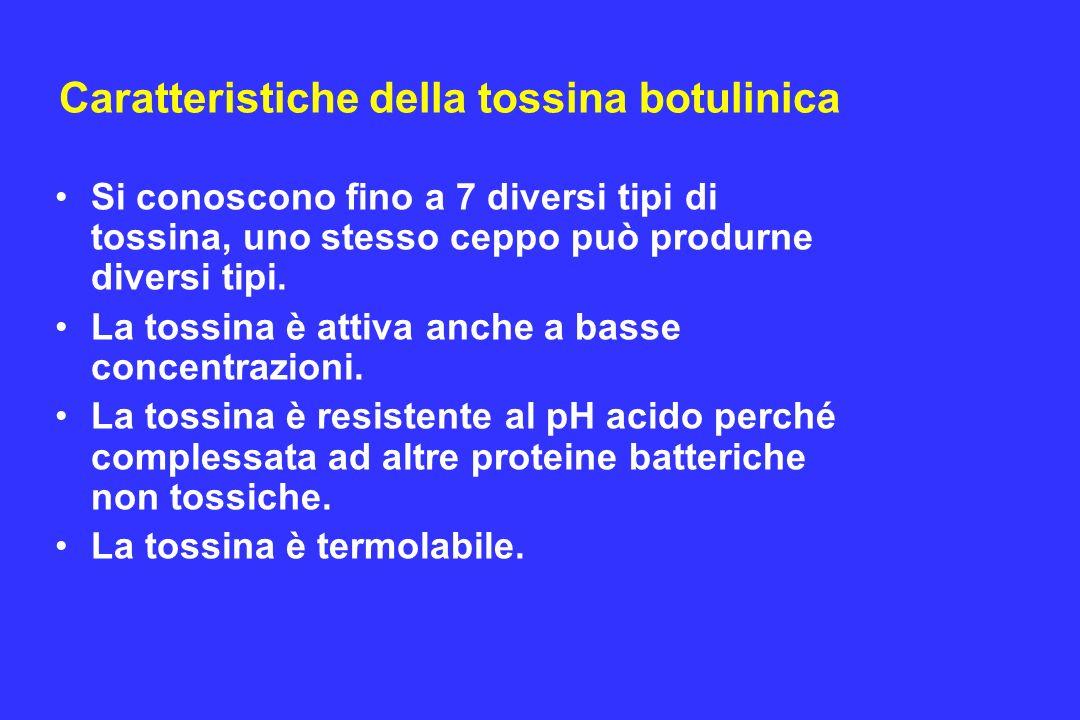 Caratteristiche della tossina botulinica