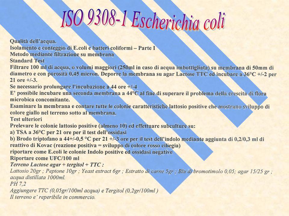 ISO 9308-1 Escherichia coli